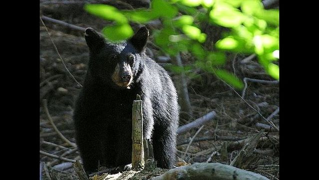 Fort Simcoe State Park Closed Because of Bear Activity