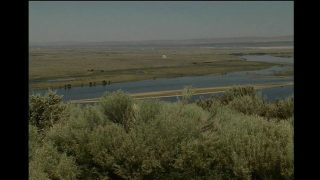 Lottery Opens for Wildflower Tours on Hanford Reach National Monument