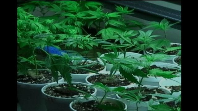 Pasco Considering A Ban on The Sale, Distribution and Growing of Marijuana