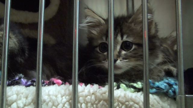 Cities to vote on upgraded animal shelter