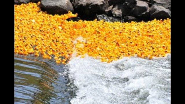 Walla Walla's 20th annual Ducky Derby fundraiser scheduled for May 20