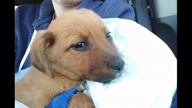 Mikey's Chance Canine Rescue struggling after saving puppies with parvo