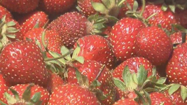 Pickers at Washington state berry farm approve contract