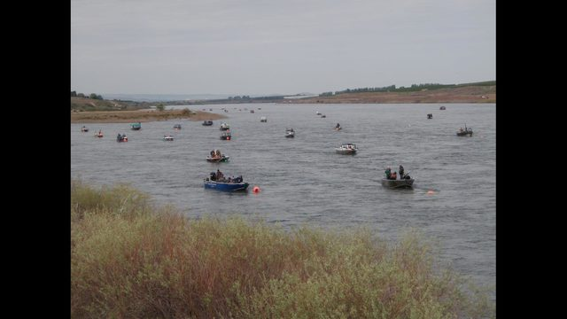 Snake River opens for fall Chinook harvest on Aug. 18