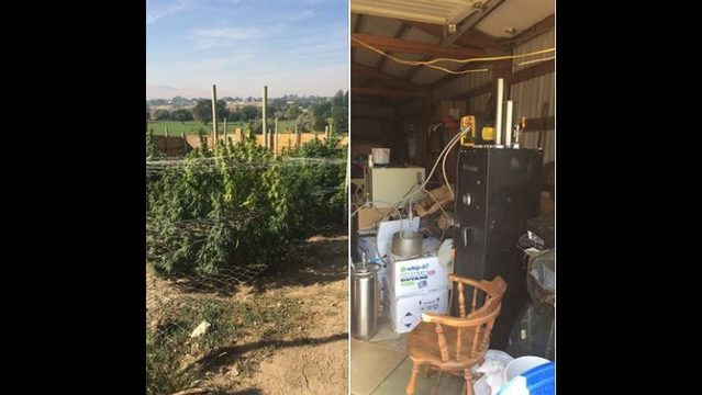 Benton County Gang Enforcement team locates two illegal marijuana grows and hash oil lab